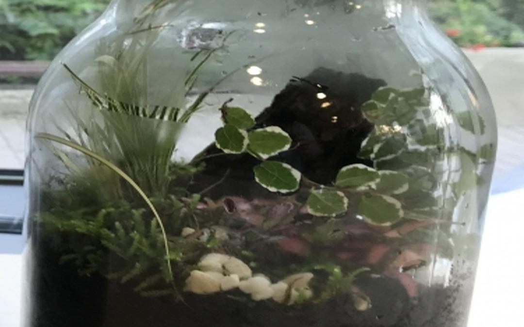 Obrazek wyróżniajacy. Zbliżenie na kompozycję roślinną za szkłem